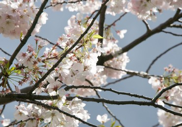 Your Ultimate Spring Tree Care Checklist