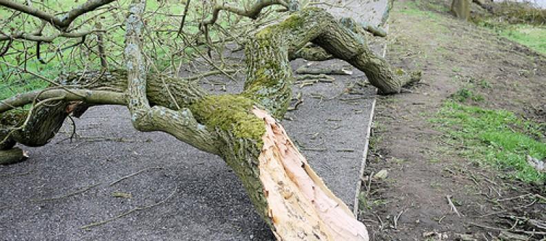Beware of Sudden Branch Drop