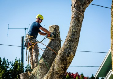 How to Select a Certified Arborist