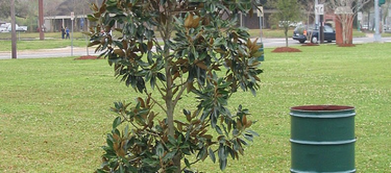 Tree Care Tips: Don't Make these Mulching Mistakes
