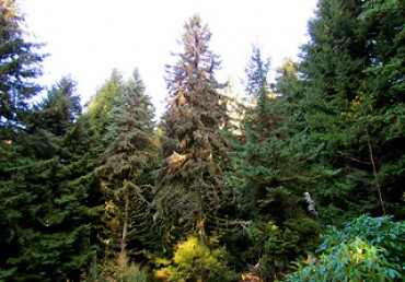 Urban Forest Pro's Volunteer Work with Hoyt Arboretum
