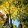 Top 5 Fall Tree Care Tips for Oregon Homeowners