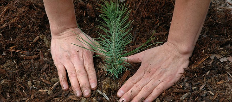 Urban Forest Pro's Holiday Gift to our Customers: Planting Trees!