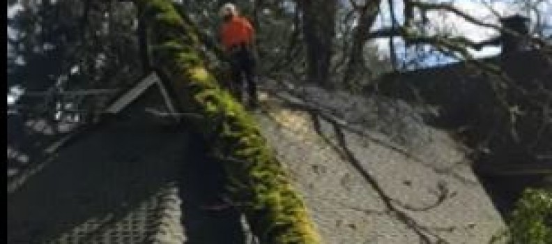Storm Damage Tree Removal: Watch Us in Action!