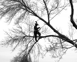 Look Out for Phony Arborists