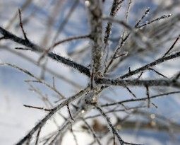 Arborist Tree Care Tips: Preparing Your Trees for Winter