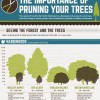 The Importance of Pruning Your Trees [Infographic]