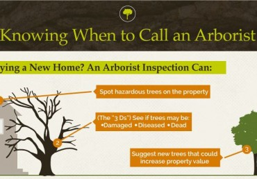 Tree Care in the Urban Forest [Infographic]