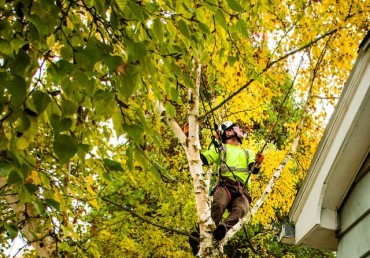 Trees and Your Home: Tips for Extending the Lifespan of Your Roof