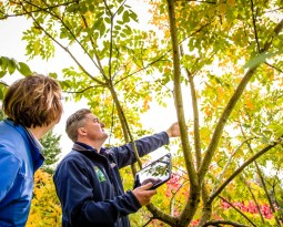 Urban Forest Pro's Tree Pest Control Methods