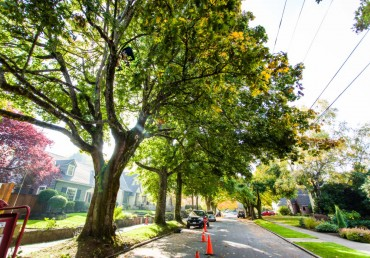 Portland Tree Permit Series: What is Title 11 Trees?