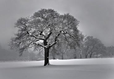 Portland Winter Tree Care Tips