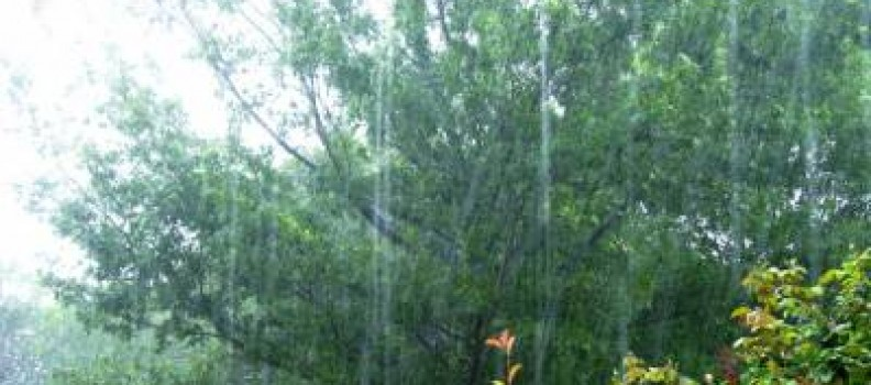 Are Your Trees Ready for Stormy Weather?