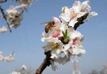 The Current State of Bee Health and the Impact on Trees