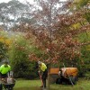 Transplanting Your Trees in the Fall
