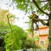 What's the Difference Between Landscapers and Arborists?