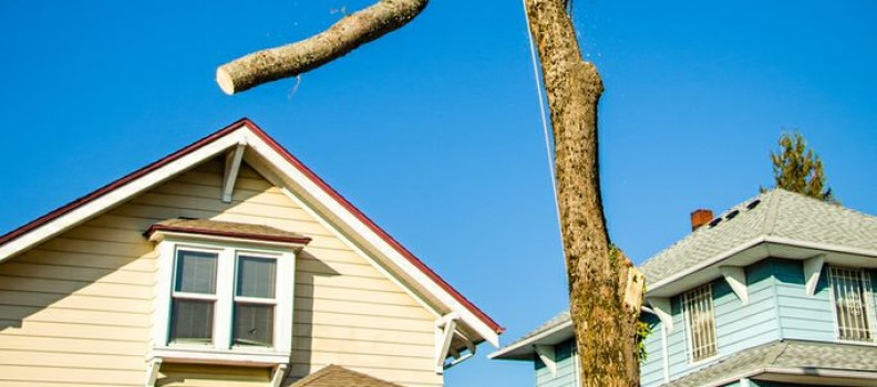 Portland Tree Permit Series: Permit Required for Private Properties