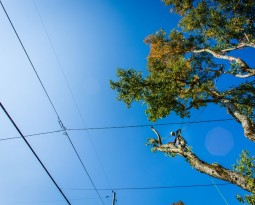 Trees and Power Lines: What You Need to Know