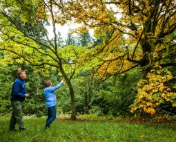 Trees to Avoid Planting in Oregon