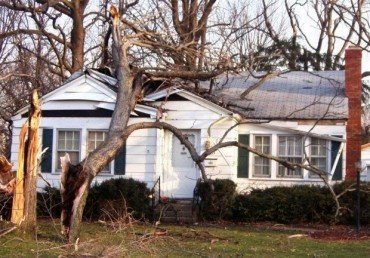 So You Suffered Tree Damage, Now What?