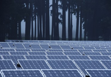 Trees or Solar Panels, Do You Have to Choose?