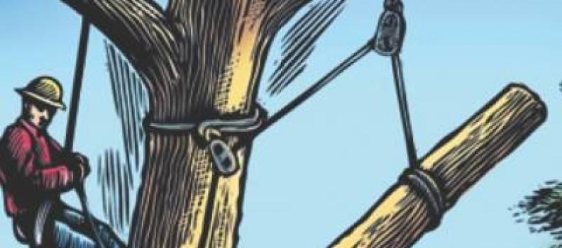 How to Recognize Tree Hazards