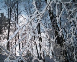 Winter Tree Care Guide: Preventing Property Damage