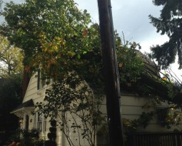 Neighbor Tree Damage: Who Pays?
