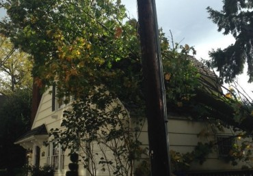 Neighbor Tree Damage: Who Pays?