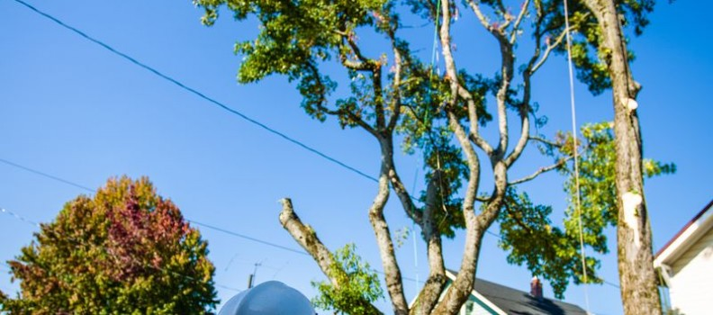 Tree Care Myths Debunked!