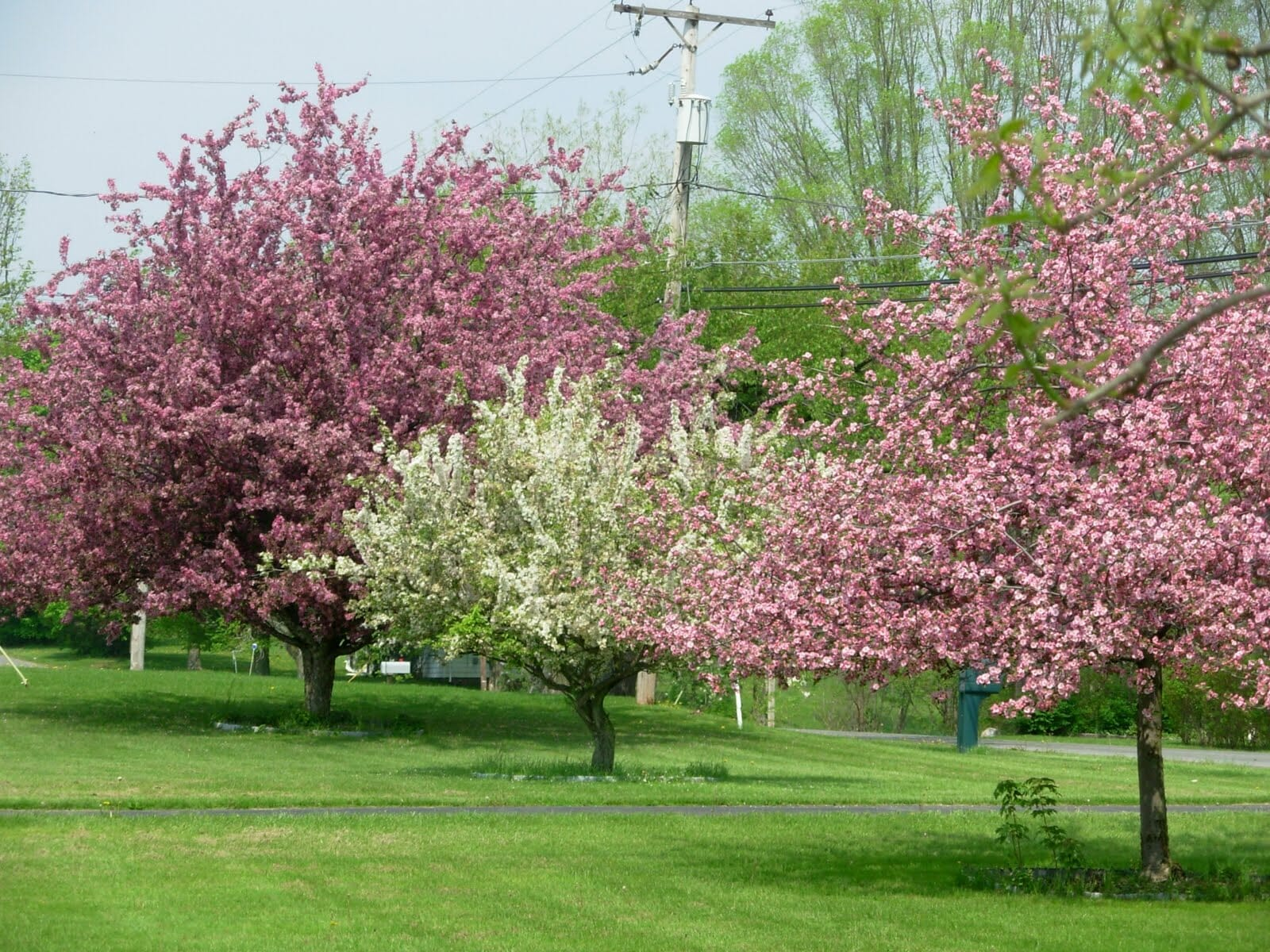 Spring Tree Care Tips For Portland Area Residents Urban Forest Pro
