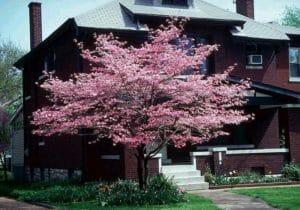 Trees improve home value.