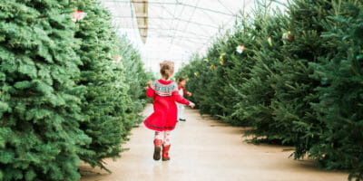 choosing a live christmas tree in portland or