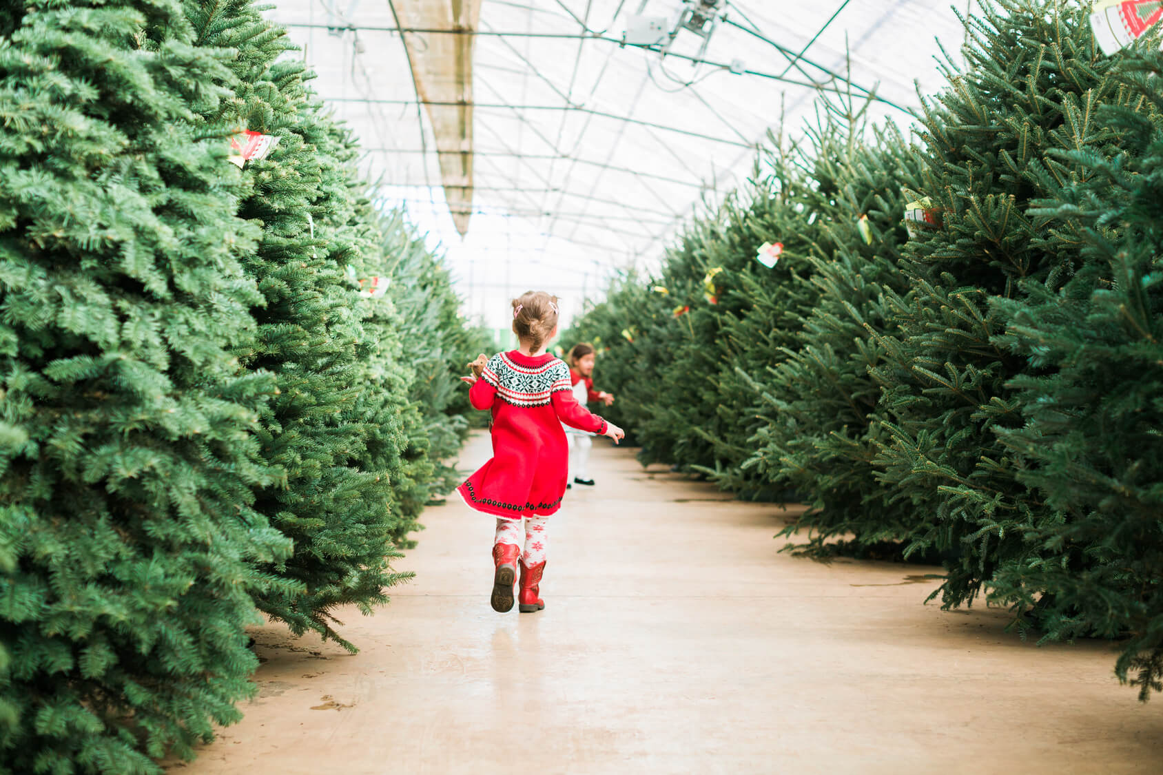 Why Planting Your Live Christmas Tree Is A Bad Idea