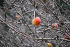 winter free tree in need of pruning.