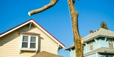 Urban Forest Pro tree removal services