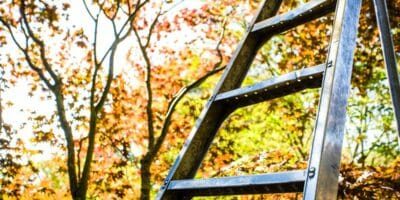 Ladder in front of fall trees