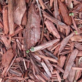 mulching-trees