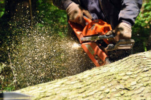 arborist providing tree services in Portland, OR