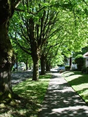 Portland Oregon Sidewalk Shaded by Trees