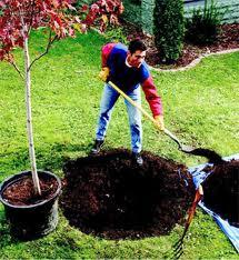 thumb_tree planting portland