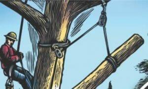Tree Hazard illustration