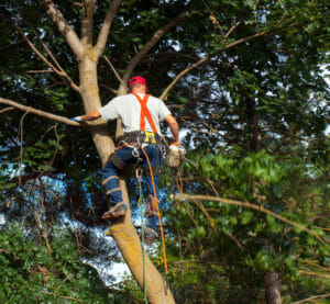 Portland, OR tree services