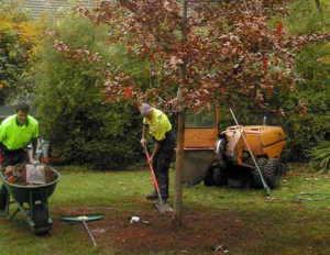 Arborists working on landscape design and installation in Portland OR