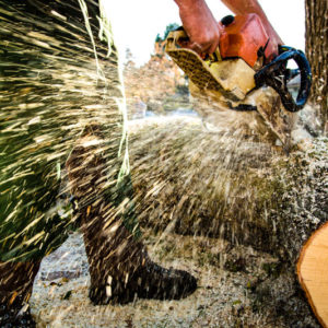 Tree Removal Portland - Urban Forest Professionals