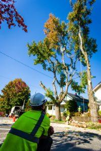 Certified Arborists providing tree care services.