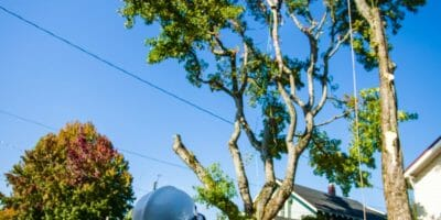 Certified Arborists providing tree care services.